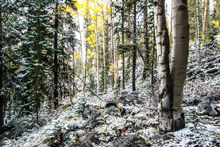 Christmas Meadows, autumn, snow, Wasatch National Forest, Utah