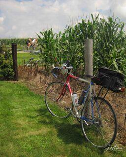 Annual, Bicycle, Ride, Across, Iowa, Dubuque County, cyclists, bike, cornfield, summer, RAGBRAI