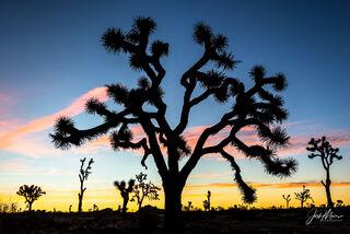 """""""Joshua Tree Sunrise"""""""