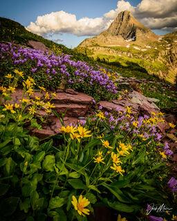 """""""Alpine Bouquet"""""""