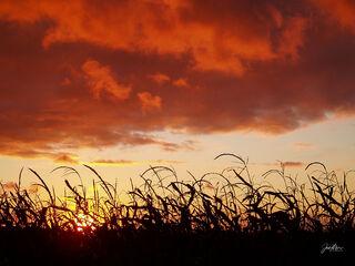 storm, clouds, dusk, sunset, Cedar County, Tipton, Iowa, cornfield