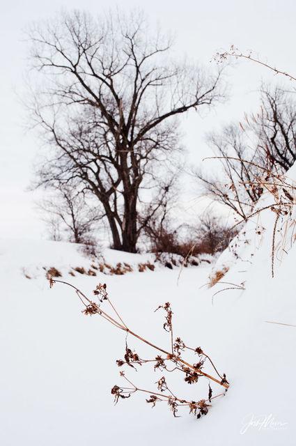 Cedar County, Iowa, Winter, Rock Creek