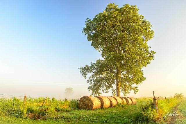 Cedar County, Iowa, farm, fog, hay bales, summer, morning, mist, countryside, rural