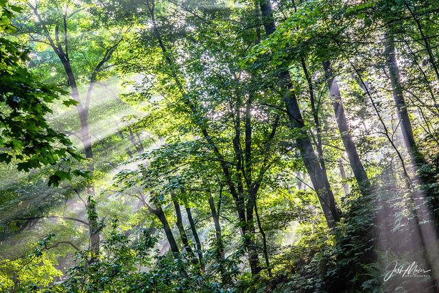 Iowa, Muscatine, County, State Park, Wildcat Den, forest, sunbeam, woodlands, hiking, recreation, Sanctuary