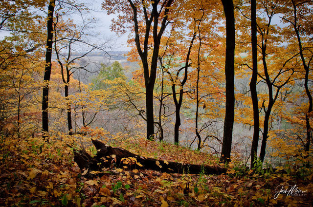 Iowa, Wildcat Den State Park, autumn, color, fall, forest