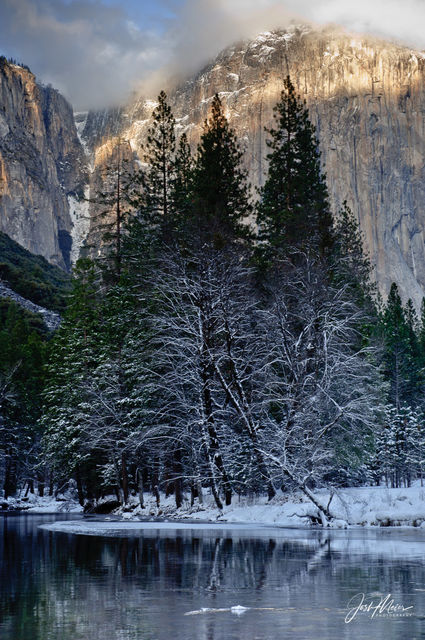 Trees outlined in a snowy lace along the Merced River in Yosemite National Park, with El Capitan towering above.