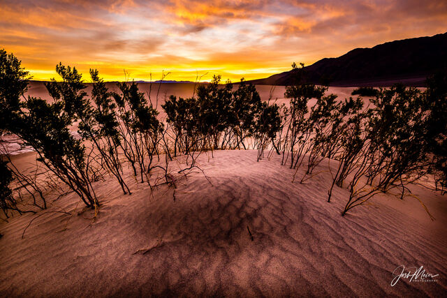Creosote bush and windblown sand patterns beneath a vivid sunrise in California's Death Valley National Park.