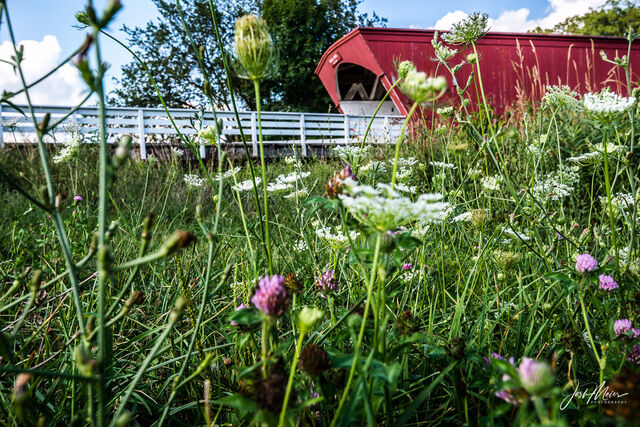 Red clover and Queen Anne's Lace fill a roadside ditch near Hogback Covered Bridge in Madison County, Iowa.