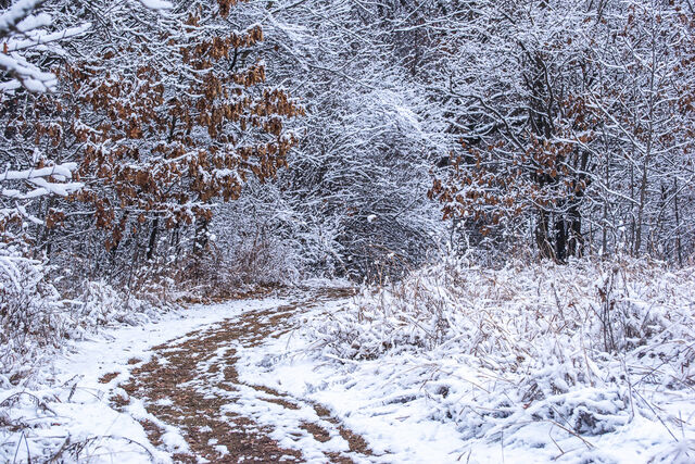 Path leading to a winter wonderland in Rock Creek Timber, Cedar County, Iowa.