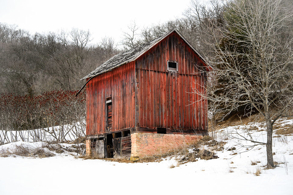 Old Barn, Yellow River State Forest print