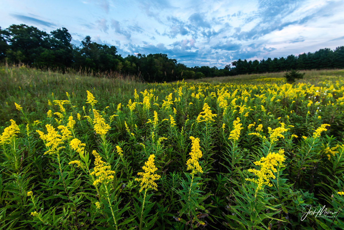 Cedar County, Iowa, Prairie, Rock Creek Timber, evening, twilight, golden rod, , photo