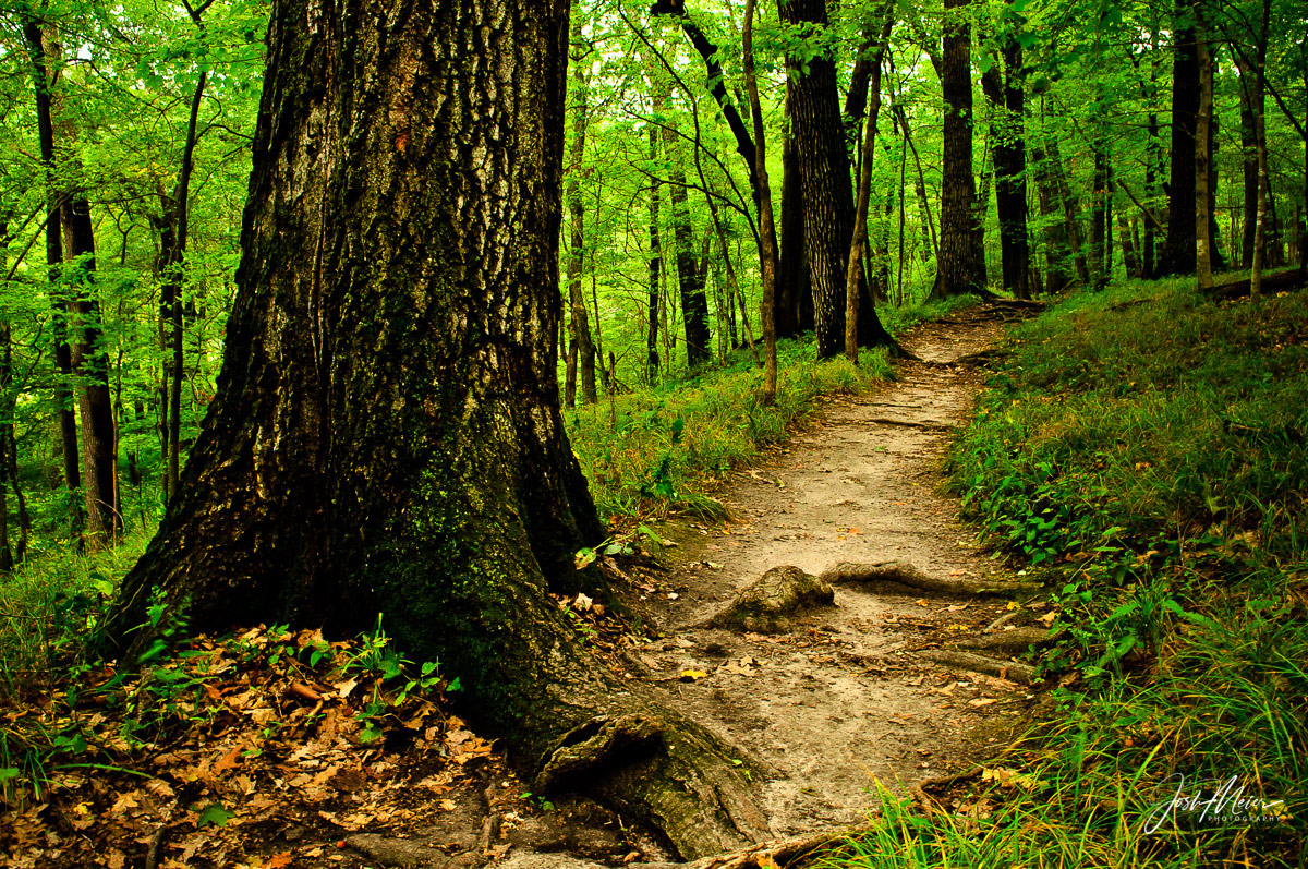 The Devil's Backbone Trail meanders beneath a deep green forest canopy in Iowa's oldest state park. Established in 1920 near&...