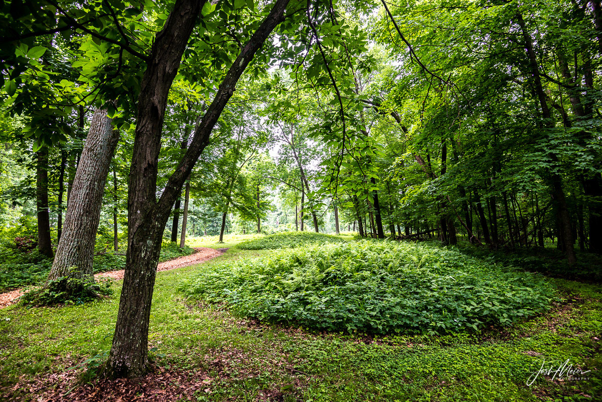 Ferns cover an ancient burial site on a bluff high above the Mississippi River in Northeast Iowa. Effigy Mounds National Monument...