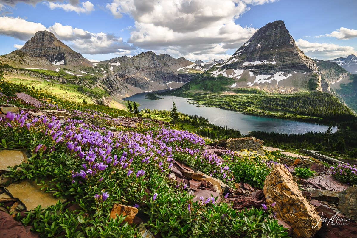 Alpine wildflowers accent this picturesque view, looking upon Hidden Lake and Bearhat Mountain in Glacier National Park, Montana.