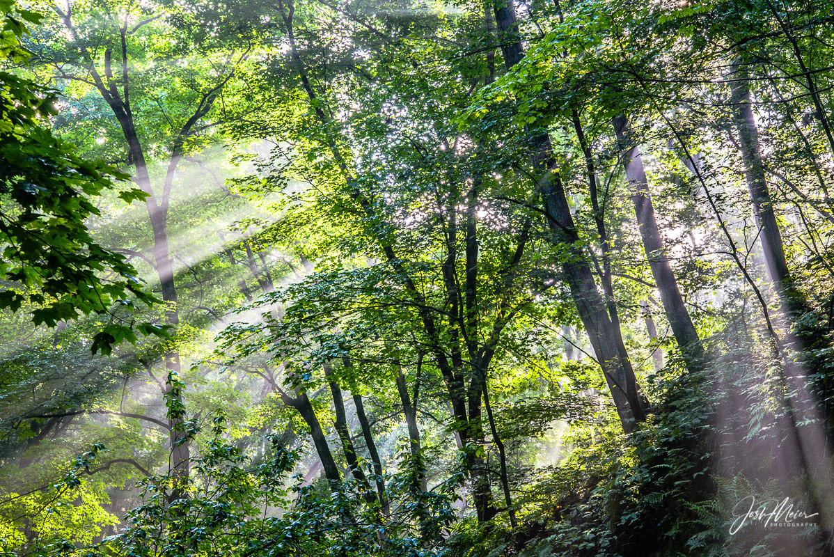 Sunbeams filter through the forest canopy on a summer morning at Wildcat Den State Park, Iowa.