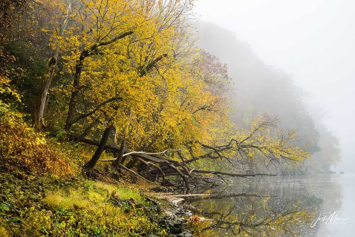 Fog parts along the river bottom on an October morning in Palisades-Kepler State Park as soft light paints yellow leaf reflections...