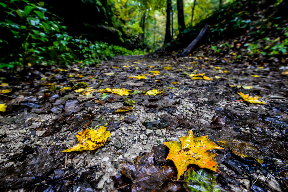 Yellow and orange speckled leaves line the trail in early autumn at Wildcat Den State Park near Muscatine. Deep wooded hollows...