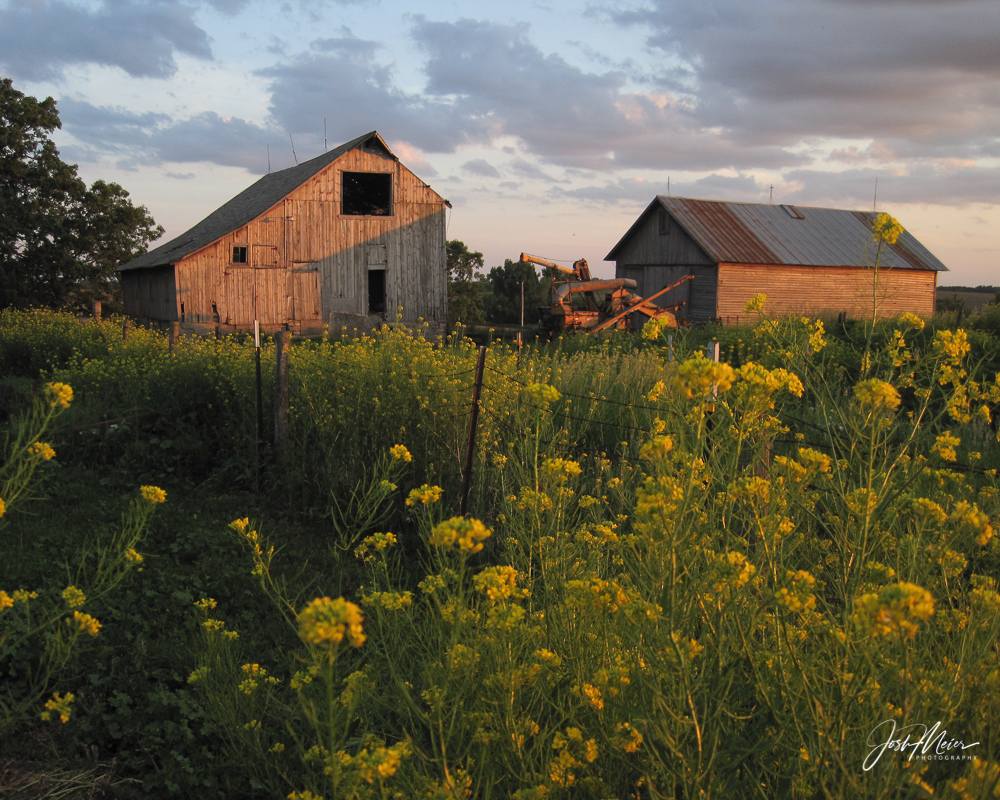 I spent a lot of time in this old barn. Helping my dad with hog chores, scooping oats, stacking hay... not always willingly....