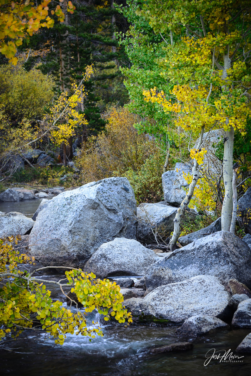 Early autumn colors along the boulder strewn waters of Bishop Creek high in the Eastern Sierra.