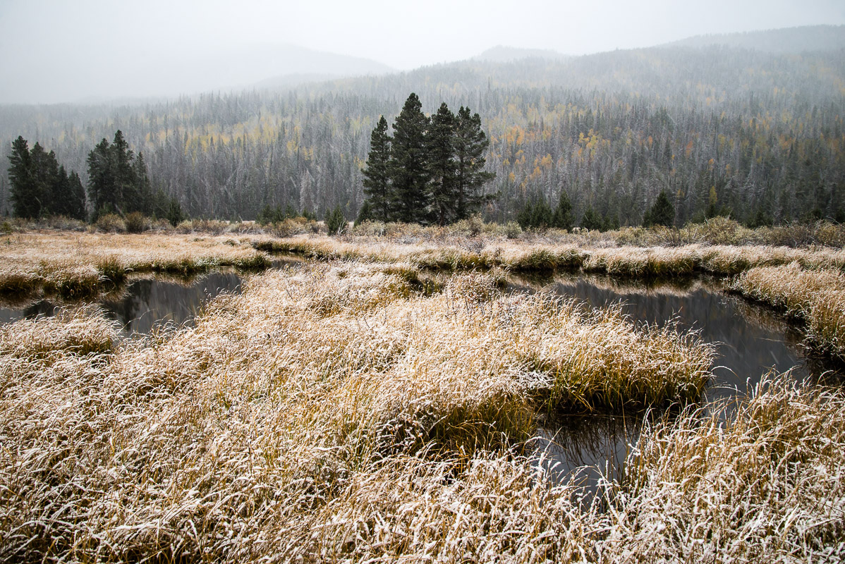 Autumn snowfall near Christmas Meadows, Wasatch National Forest, Utah.