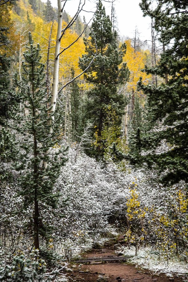 Autumn snowfall near Christmas Meadows. Wasatch National Forest, Utah.