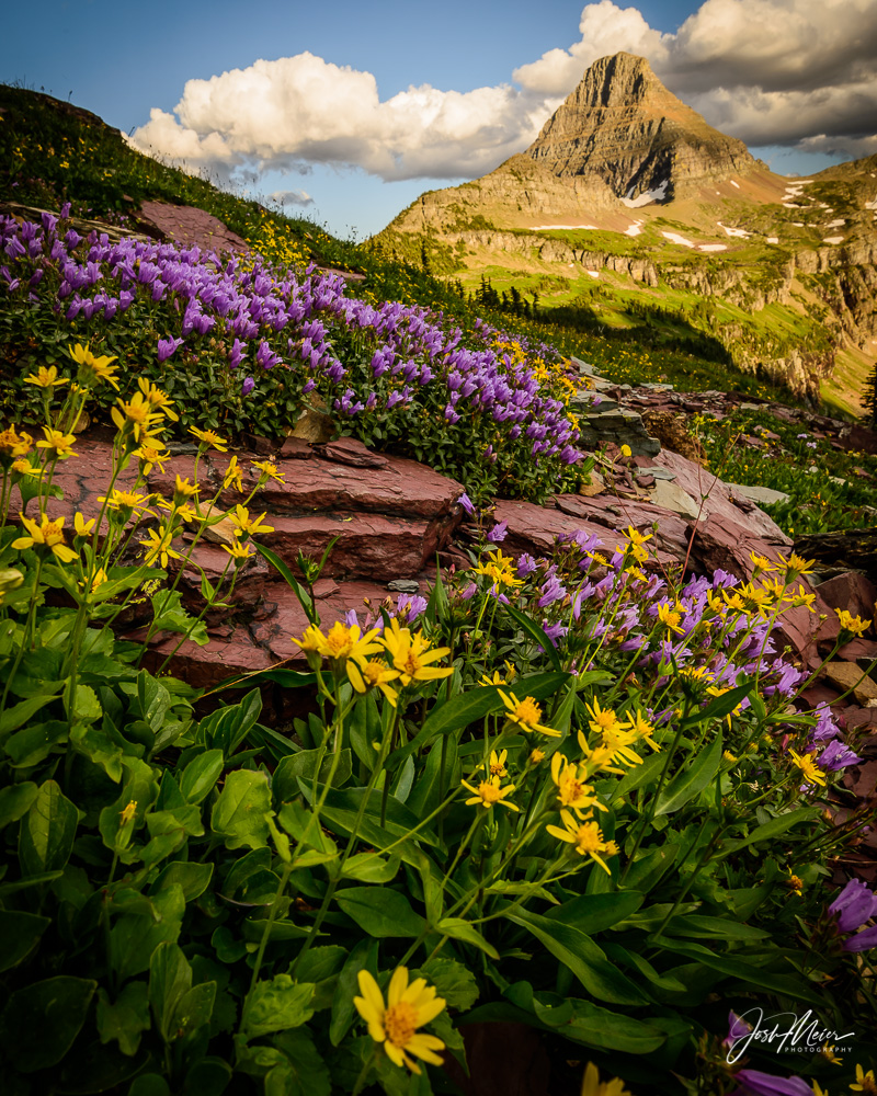 Wildflowers and alpenglow on a summer evening near Logan Pass in Montana's Glacier National Park.