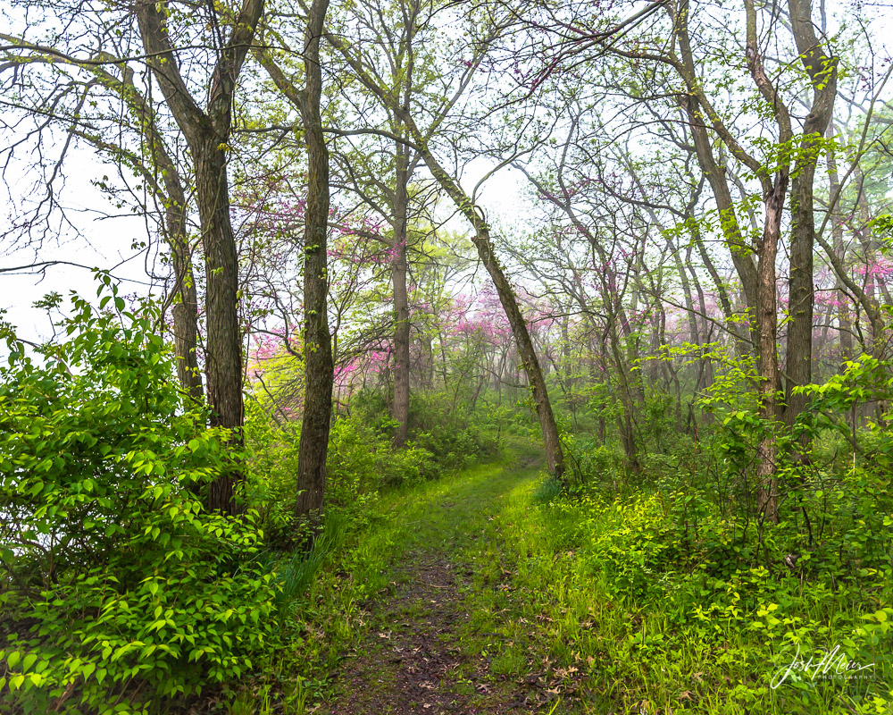 Pink redbud blossoms line the trail on a foggy spring morning in Red Haw State Park. This enchanted scene seems to invite slipping...