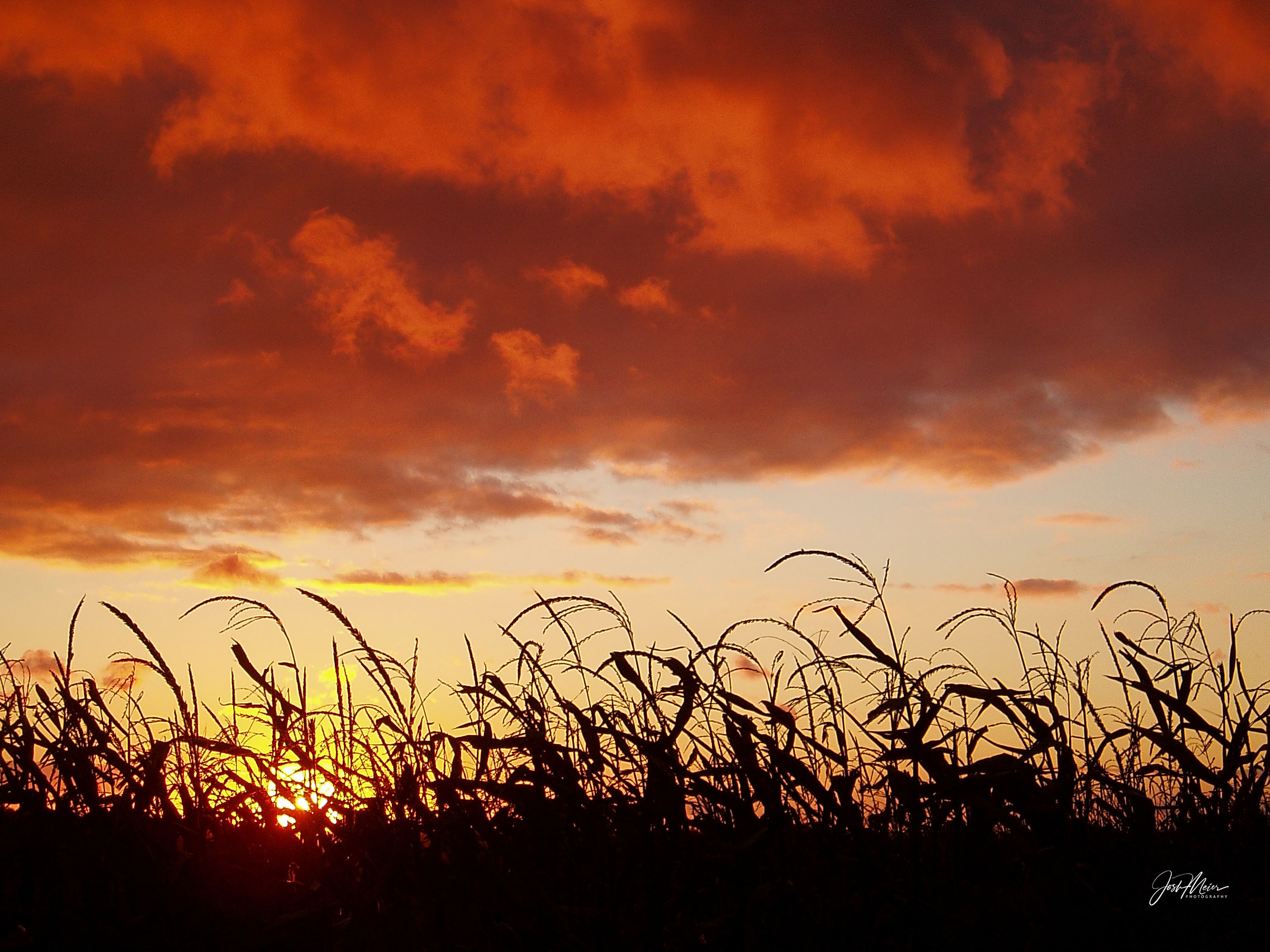 Storm clouds roll over a silhouetted cornfield at sunset west of Tipton, Iowa.