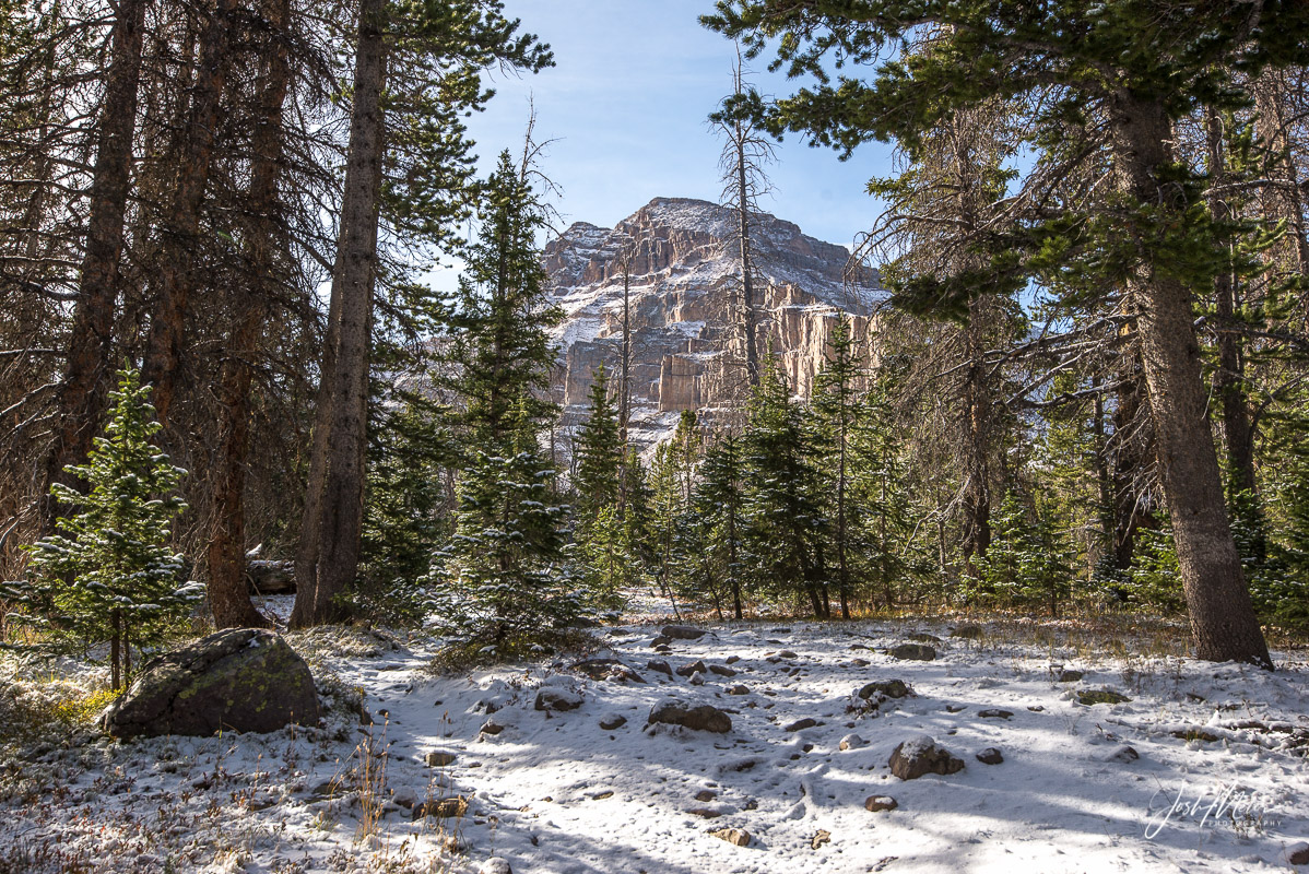 Ostler Peak through the trees after an autumn snow in the High Uintas Wilderness. Wasatch National Forest, Utah.