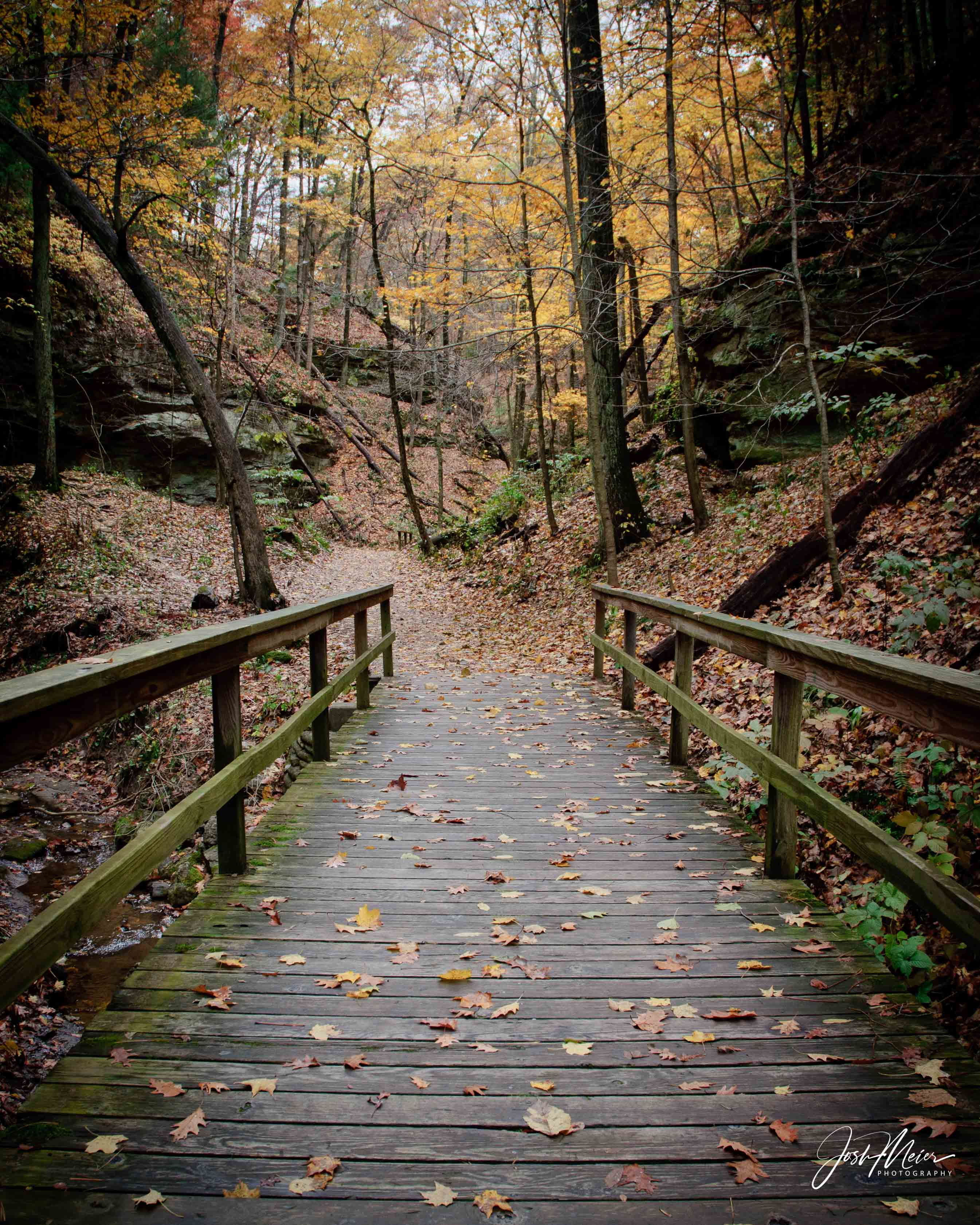 Fallen leaves blanket the ground in Wildcat Den State Park near Muscatine.
