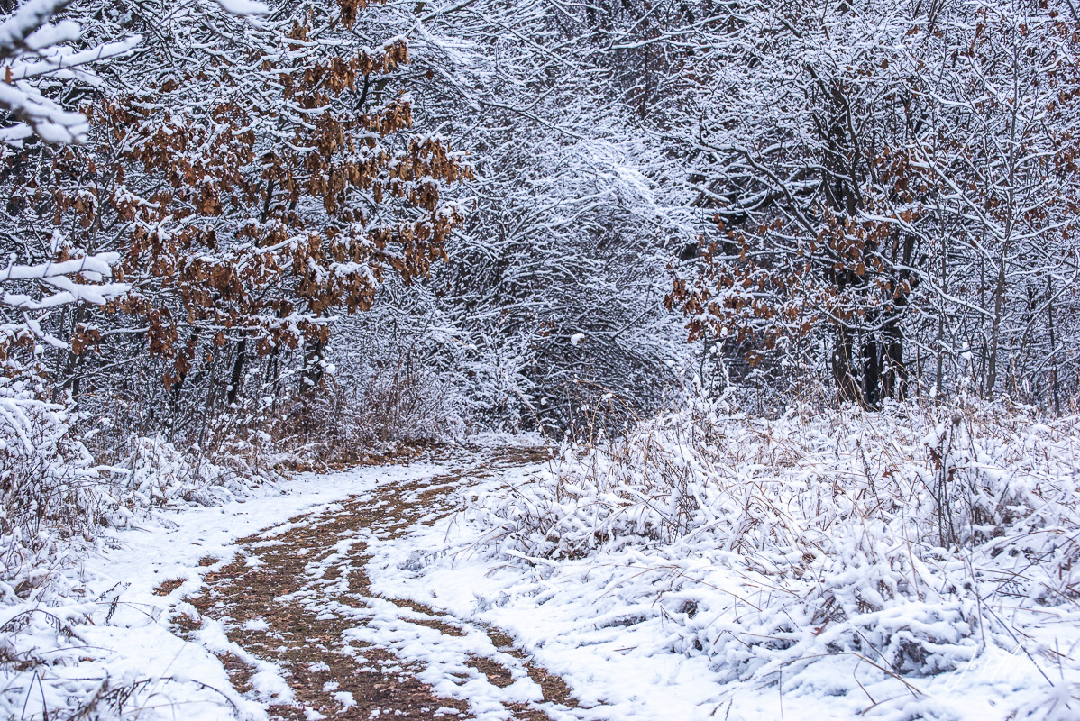 Path leading to a winter wonderland at Rock Creek Timber in Cedar County, Iowa. Limited Edition of 100.